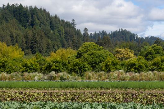 Agriculture on the Central Coast under review