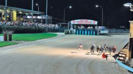 Gosford greyhound racing at the Gosford Showground