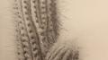 Winner of the 2016 Gosford Art Prize Bronwyn Van de Graaff's Cactus