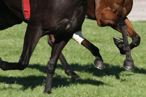 Racehorse training at Gosford racecourse has been given a new lease of life.