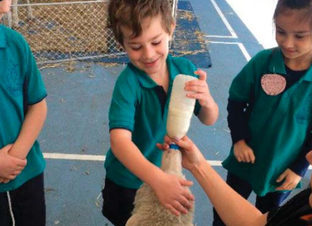 Kindergarten students getting up close and personal with the animals