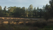 Davistown Wetlands