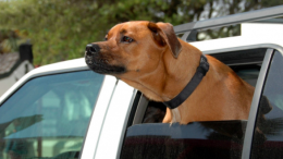 Care with dogs and children in cars this weekend's heatwave: Image; Public Domain Images