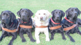 Rhett, Wongo, Pixie, Rachel and Ranger have all graduated from Guide Dog training and are ready to change a vision impaired person's life for the better