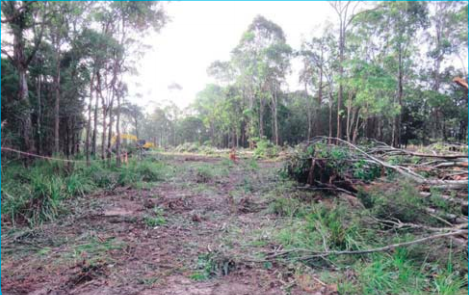 within the Wyong Biocertification study area