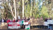 Kangy Angy residents in front of the threatened trees