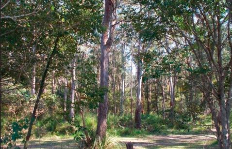 A view of the East Gosford Community Reserve