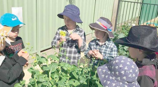Pupils of Woy Woy Public School learn about drought.
