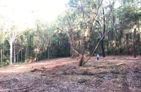 MacMasters Beach land clearing. Note how small the man is in relation to the space cleared.
