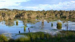 Porters Creek Wetland on the Central Coast.