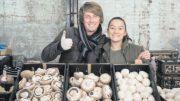 Mushroom sellers