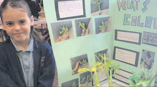 A young Woy Woy pupil at the school's Science Fair