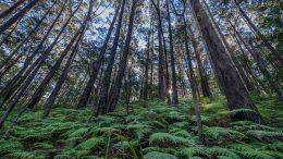 Trees Jilliby