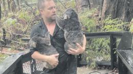 Park Director, Tim Faulkner, moves some koalas to shelter